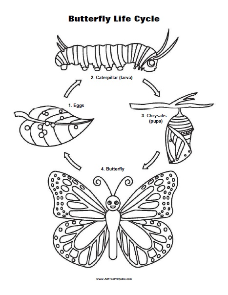 Free Printable Life Cycle of a Butterfly Coloring Page