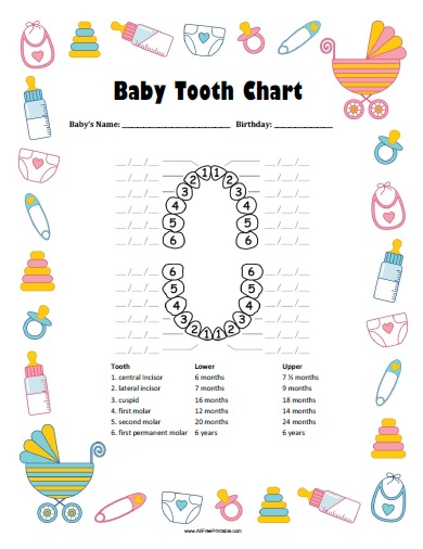 Baby Tooth Chart - Free Printable - Allfreeprintable.Com