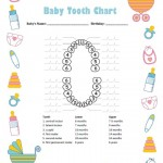 Baby Boy Tooth Chart