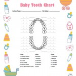 Baby Girl Tooth Chart